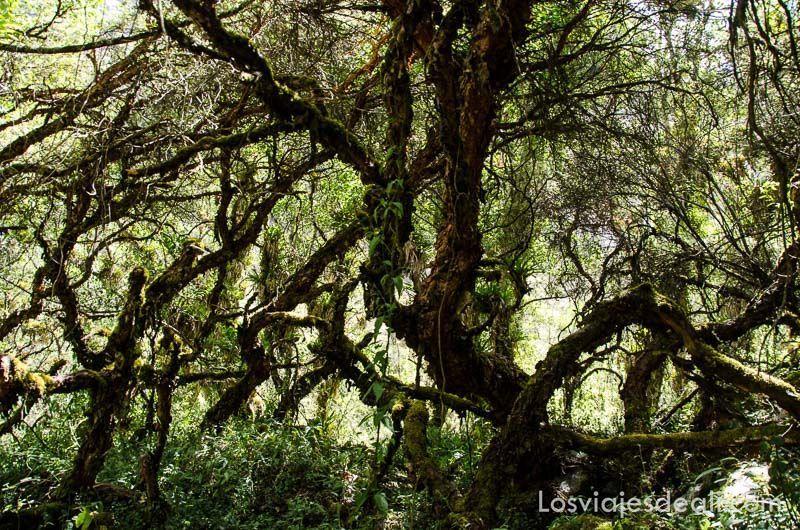 parque nacional de huascaran bosque primigenio