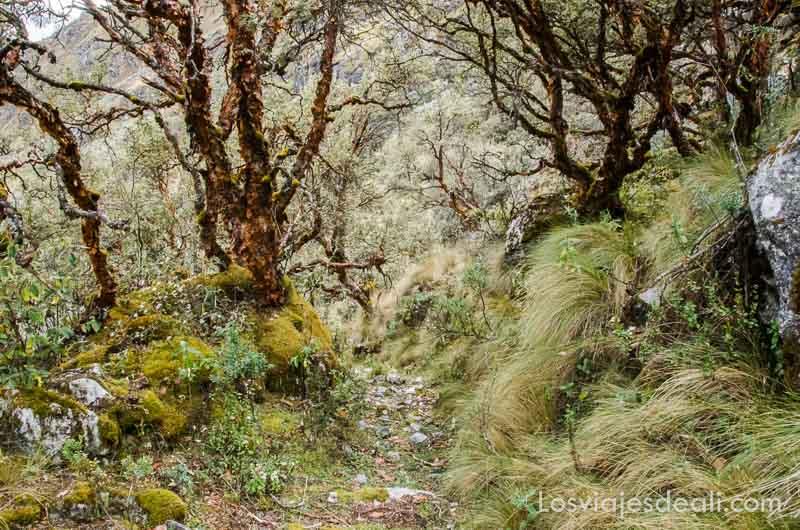 parque nacional de huascaran bosque
