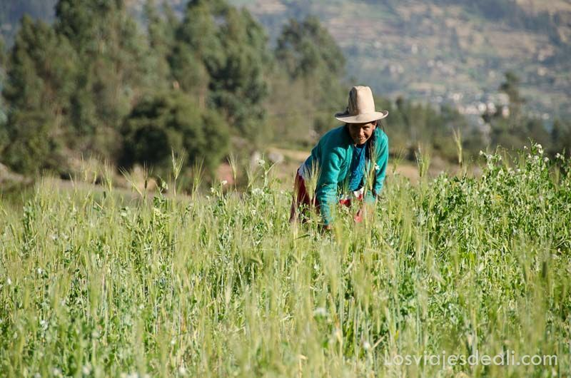 vida rural en comunidad humacchuco