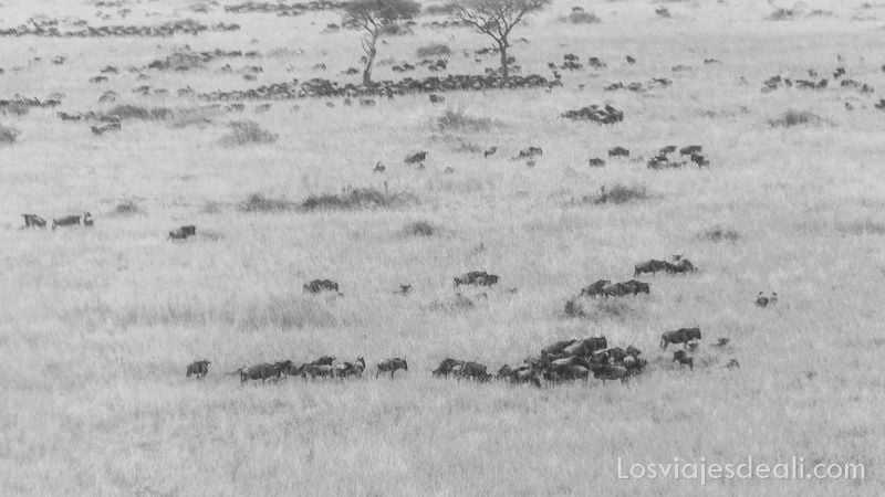 dos días en masai mara vuelo en avioneta