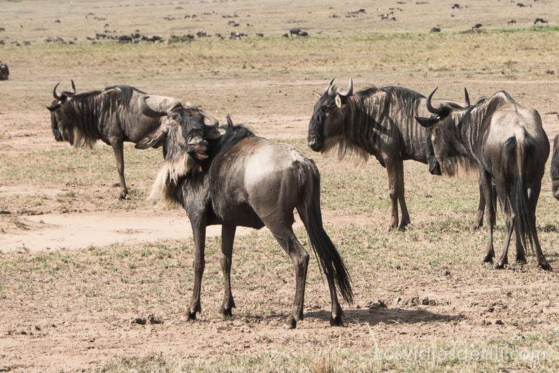 dos días en masai mara ñu