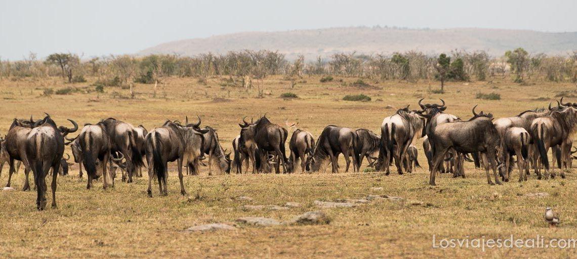 dos días en masai mara