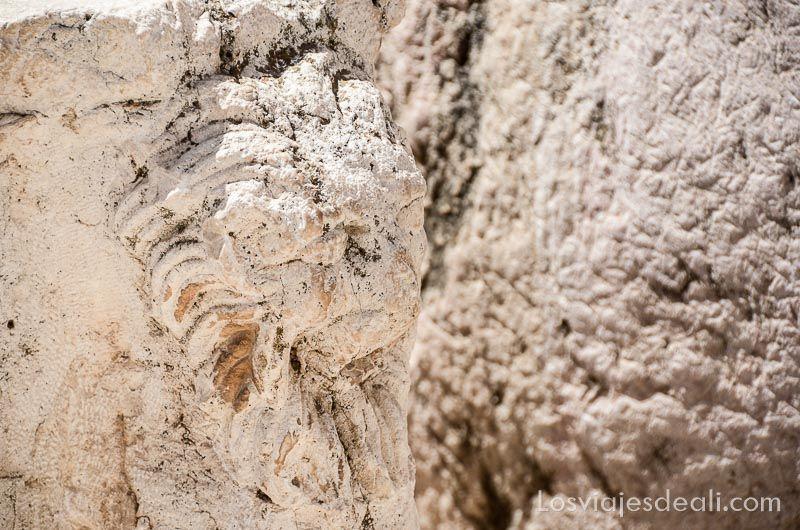 relieve de una cabeza de hombre con pelo de león