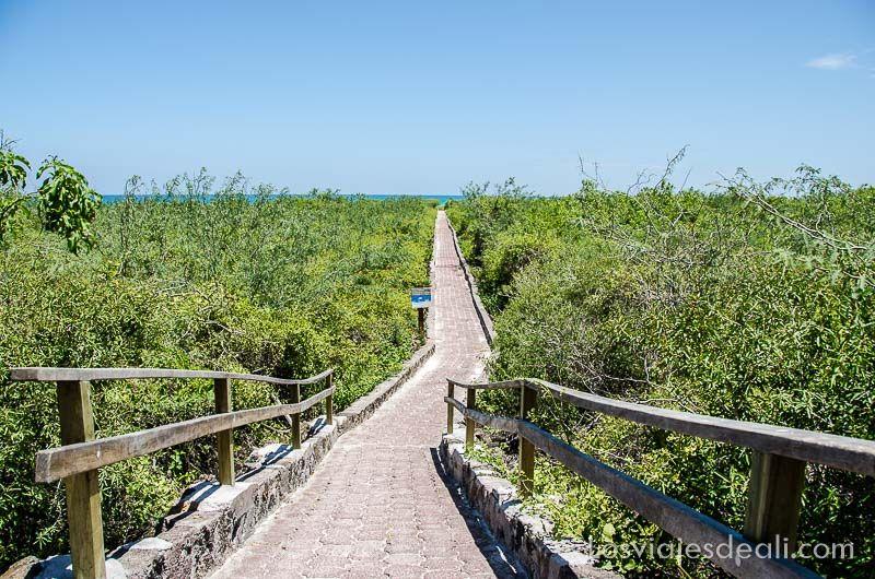 isla santa cruz camino a tortuga bay
