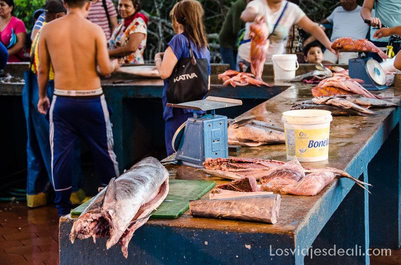 isla santa cruz mercado pescado puerto ayora