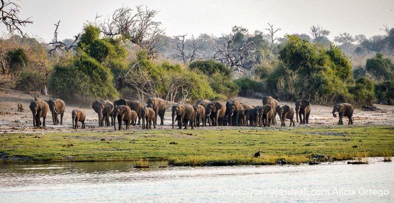 grupo de elefantes en parque nacional de chobe