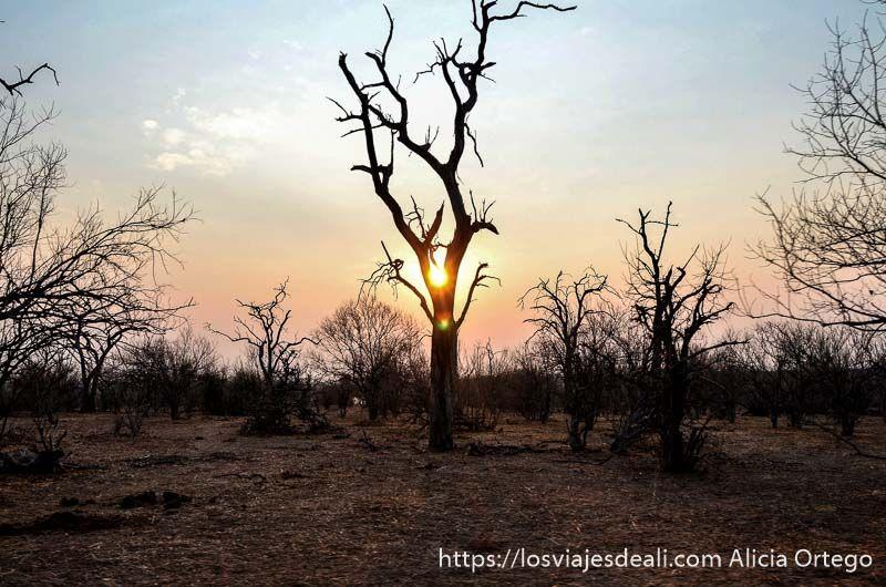 sol en parque nacional de chobe