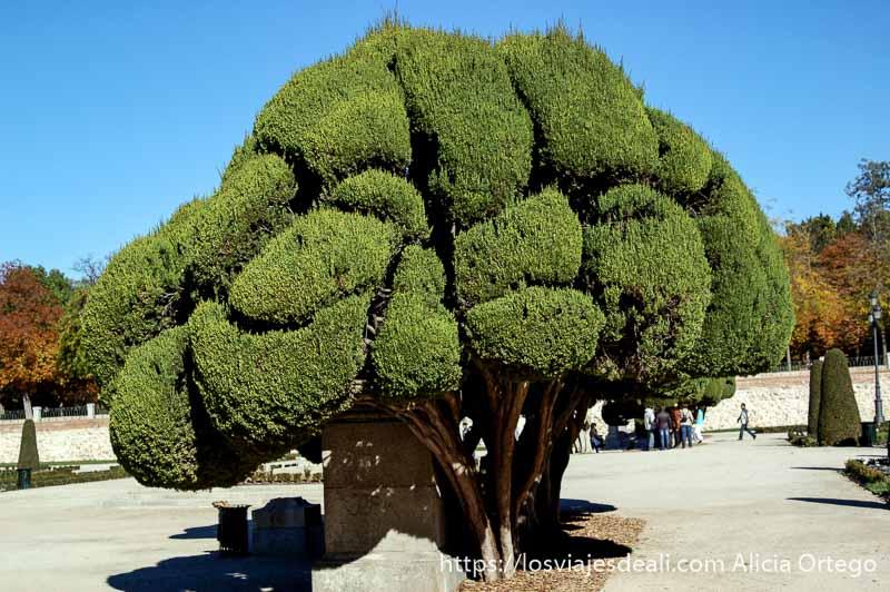 guia del retiro árbol