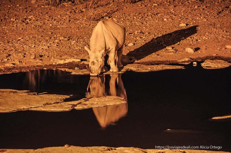 rinoceronte en Etosha por la noche
