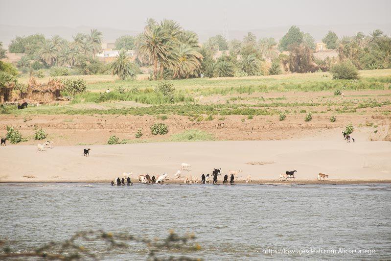 río Nilo en Sudán