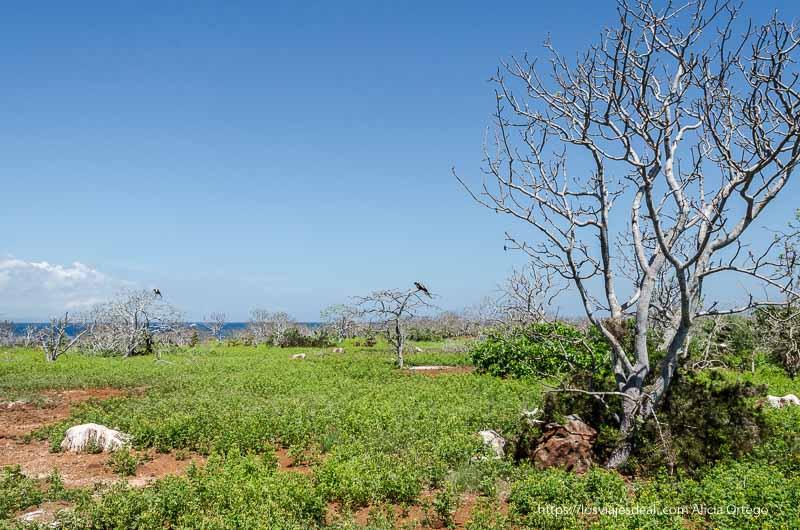 paisaje de árboles aislados en excursión a isla seymour