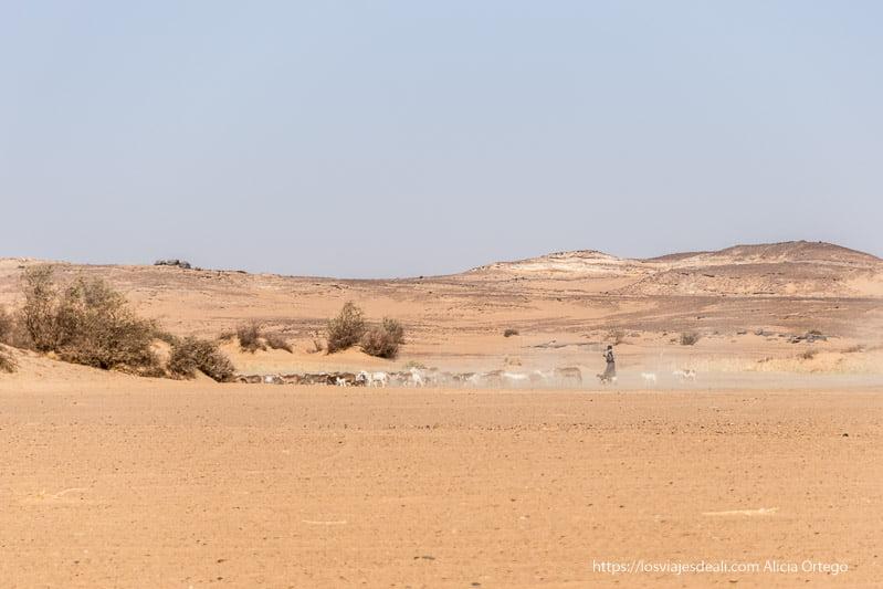pastor de cabras en el desierto de Sudán
