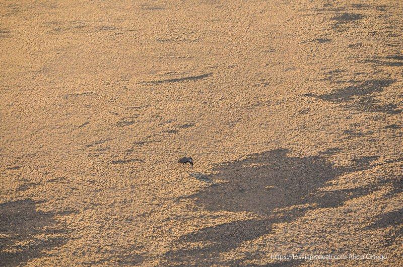 órix visto desde lo alto de la duna 45 amaneceres del mundo