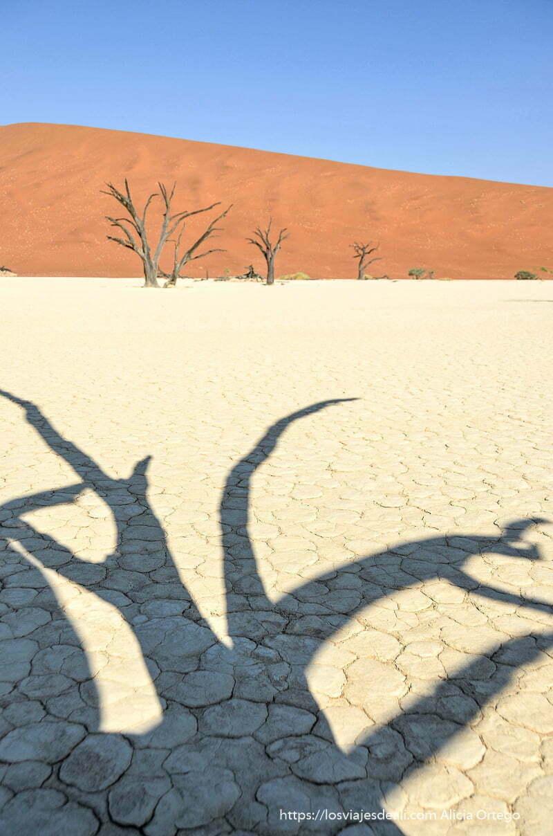 sombra de árbol sobre suelo seco con duna de fondo en Deadvlei Namibia