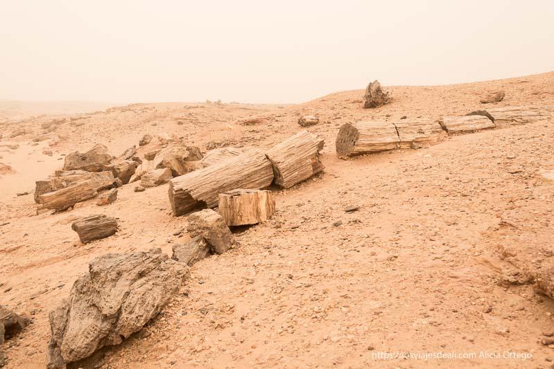 troncos de árbol petrificados en Sudán