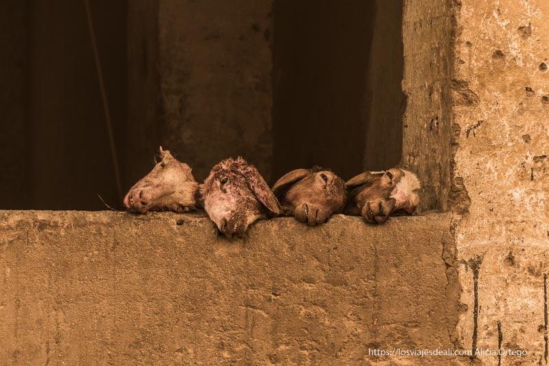 cabezas de cabra en una carnicería de Sudán