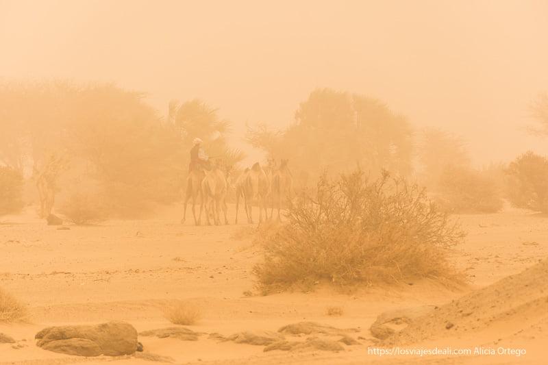 camellero con sus camellos bajo la gran tormenta de arena