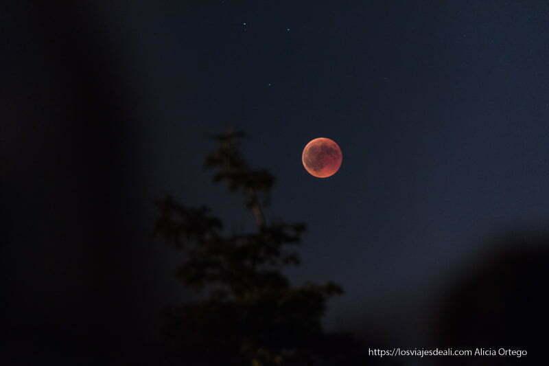 luna roja por encima de ramas de árboles eclipse de luna 2018