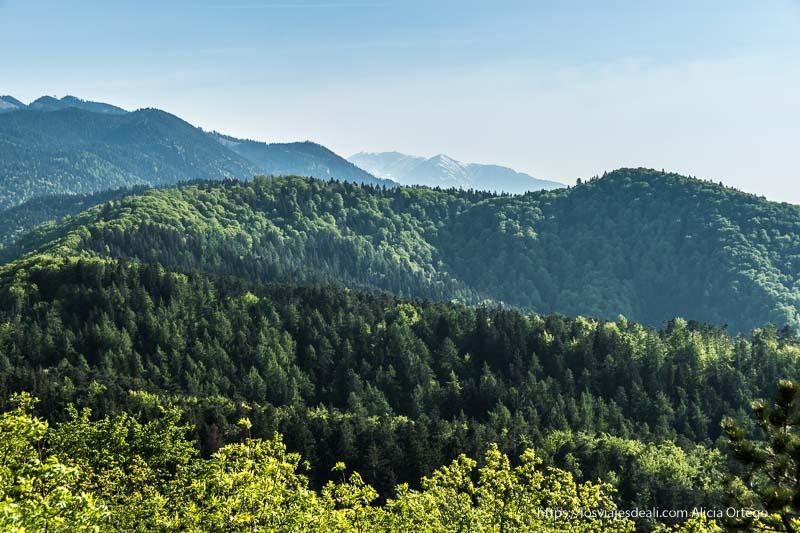 vistas de los cárpatos llenos de bosques dos días en brasov
