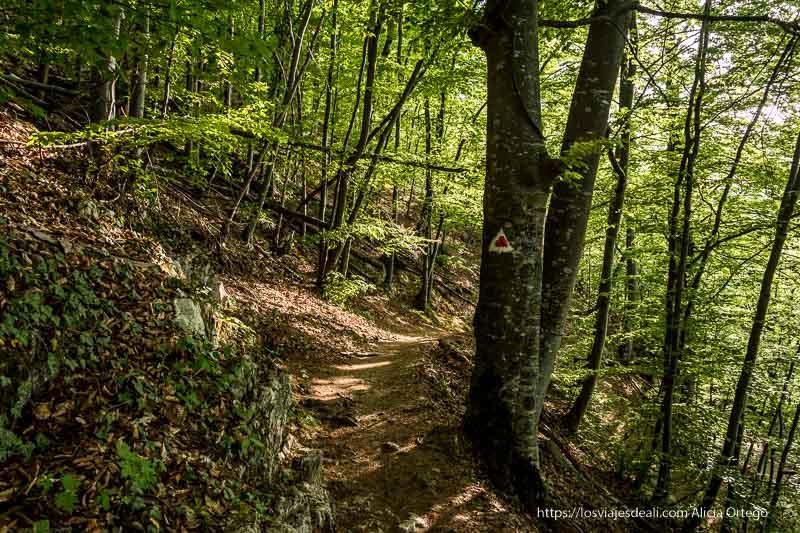 camino de bajada del monte tampa entre hayas