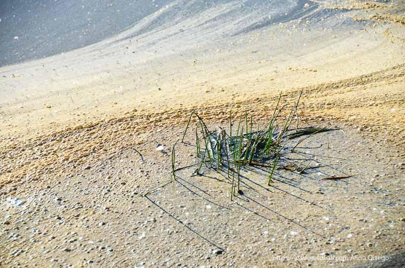 aguas estancadas con un grupo de hierbas en el centro