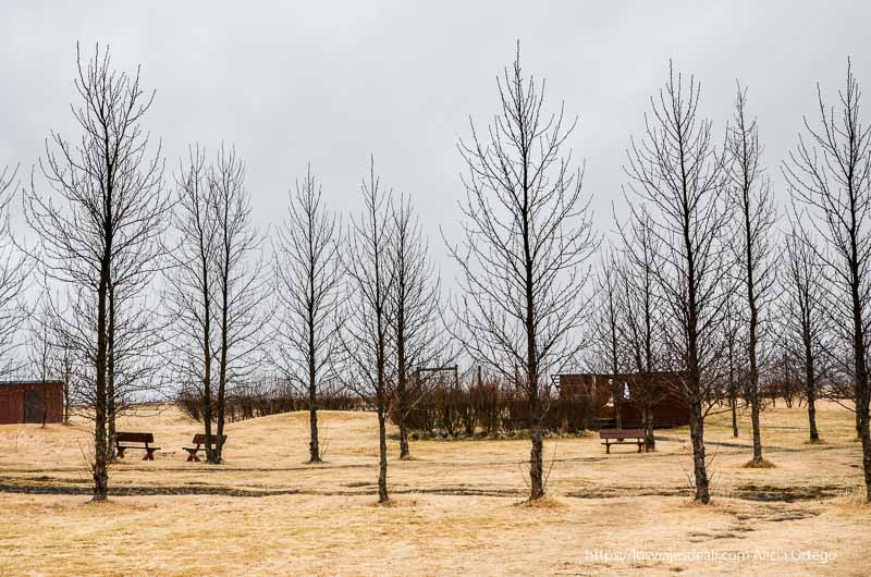 paisaje de invierno con árboles sin hojas y hierba congelada cultura islandesa