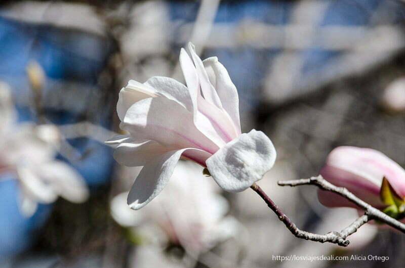 flor de color rosa y blanco real Jardín Botánico de Madrid