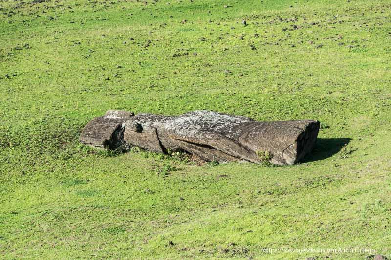 moai tumbado en la hierba cómo es viajar a Isla de Pascua