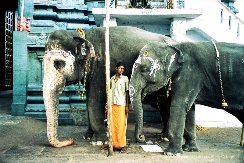 cuidador con dos elefantes en puerta de templo de kanchipuram tamil nadu