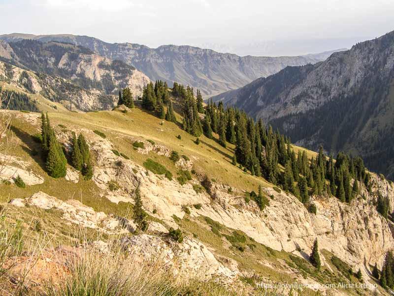 montañas escarpadas con bosquecillos de abetos de camino al lago song kol