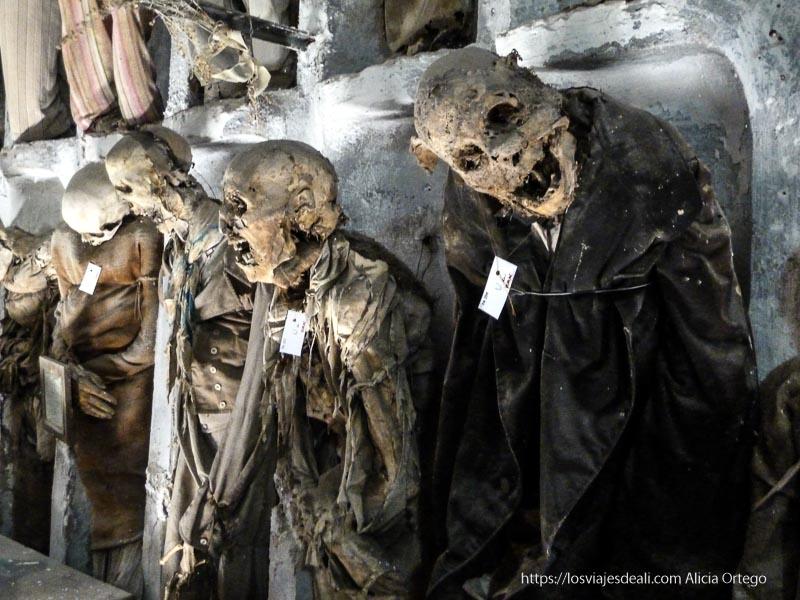 momias de las catacumbas de los capuchinos palermo desconocido
