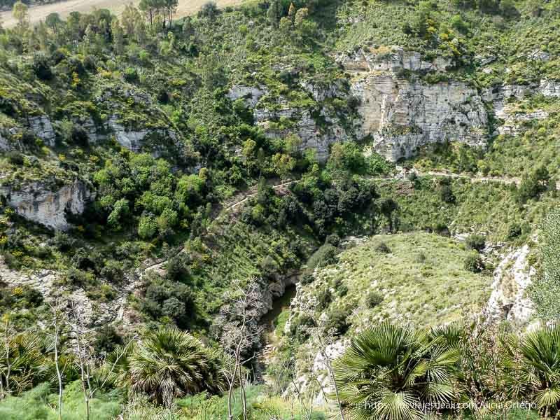 cañón del río con mucha vegetación