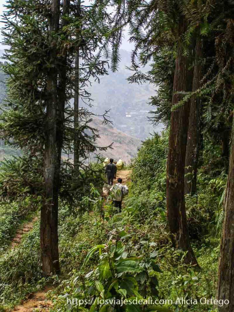 paisaje de montaña con árboles muy altos en el norte de vietnam