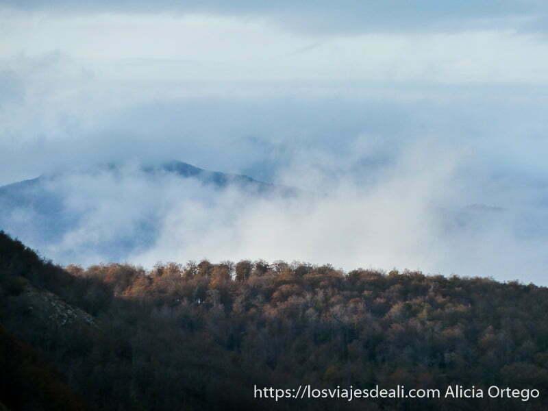 bosque de hayas y nieblas que suben de abajo en selva de irati