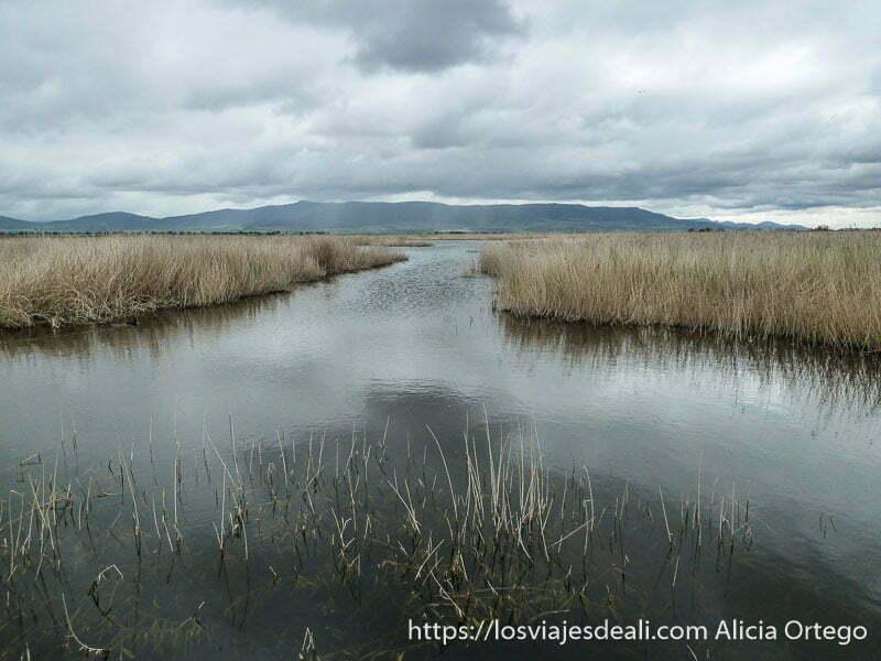 canal de agua entre carrizos bajo nubes amenazadoras tablas de daimiel