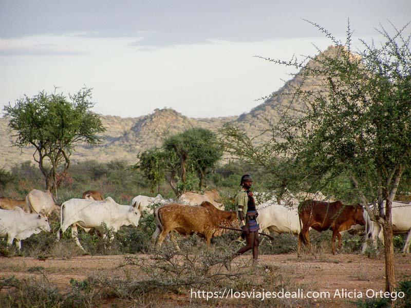 hombre hamer volviendo al pueblo con sus vacas de fondo colinas turmi