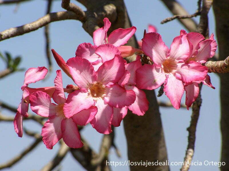 flores de color rosa en turmi