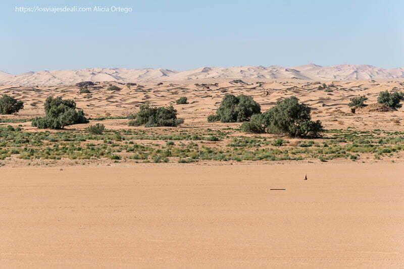 gran arenal erg admer y árboles de oasis delante paisajes del sahara