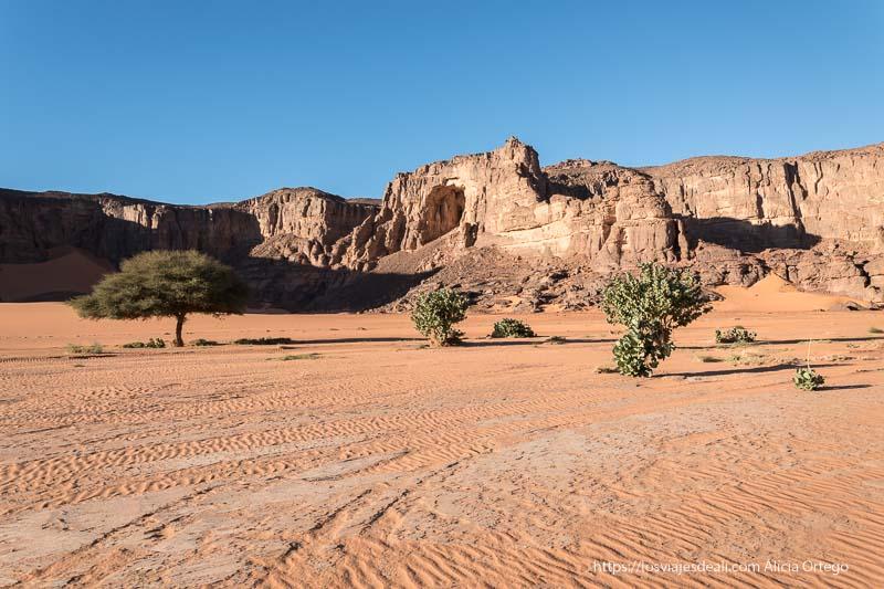 arbustos, una acacia y montaña con gran arco paisajes del sahara