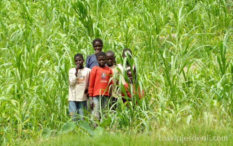 grupo de niños entre plantas de mijo mirándonos trekking en el monte ziver
