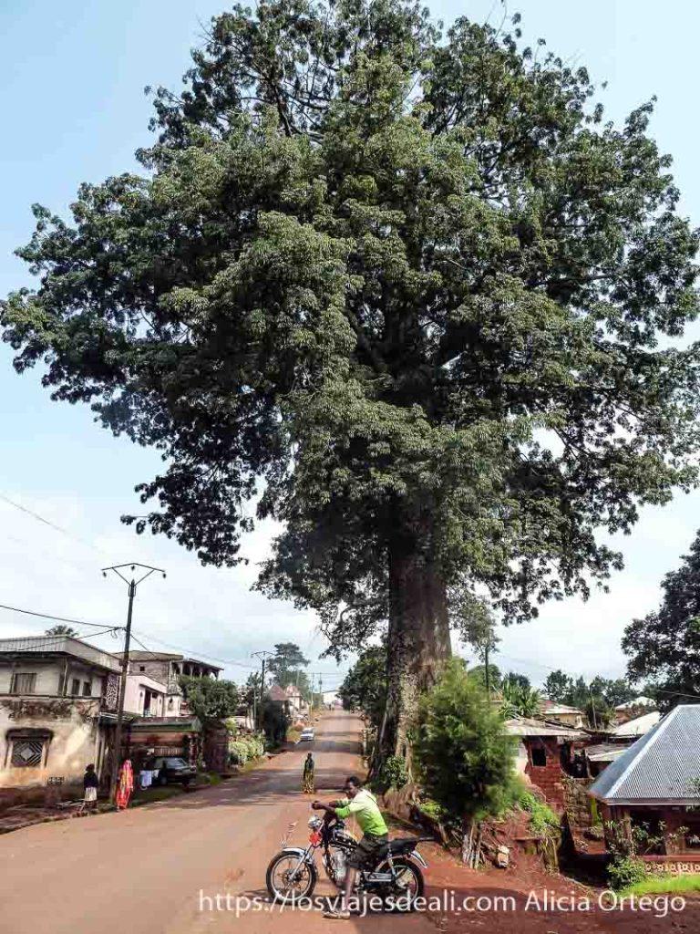 árbol muy grande en calle del barrio de artesanos de foumban