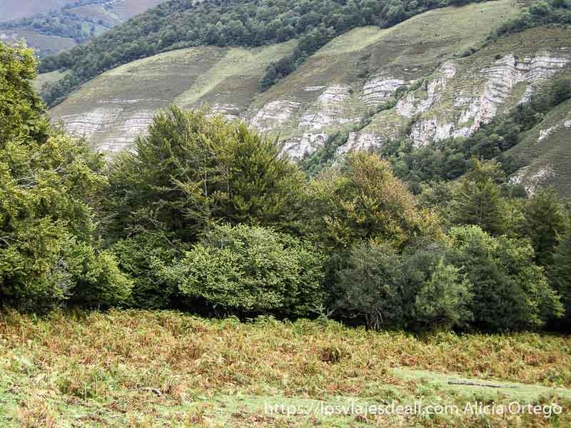 paisaje de monte y árboles en el comienzo del parque natural saja besaya