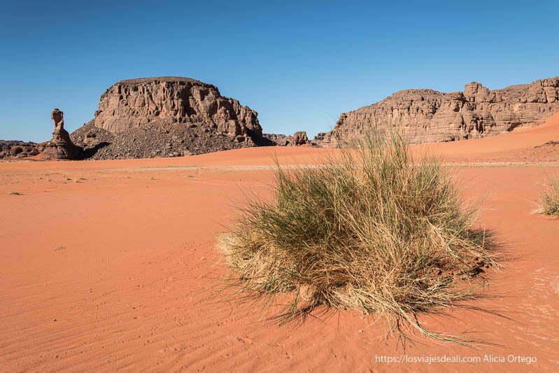 paisaje del sahara con planta tipo hierba semiverde