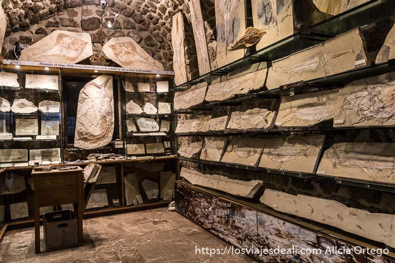 tienda de venta de placas con fósiless de peces y manta rayas en byblos