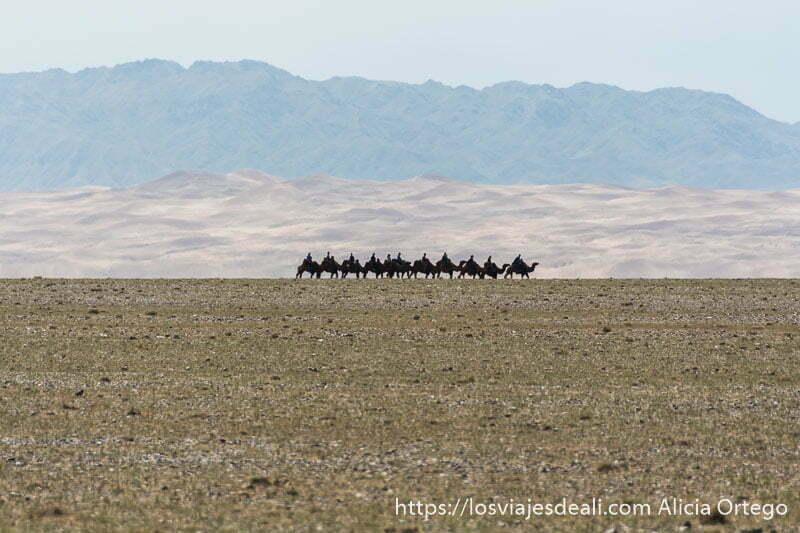 fila de 11 camellos cada uno con una persona andando en el horizonte y detrás las grandes dunas y montañas del desierto del gobi