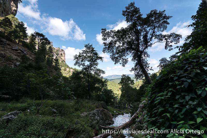paisaje con montañas al fondo cielo azul con algunas nubes blancas un árbol que se recorta y río escapada a albacete