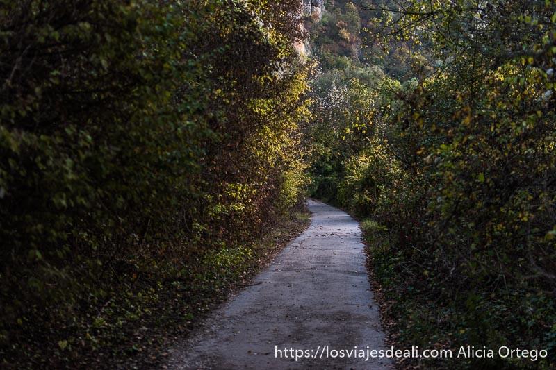 camino entre árboles con hojas amarillas en ivanovo sitio patrimonio de la humanidad de bulgaria