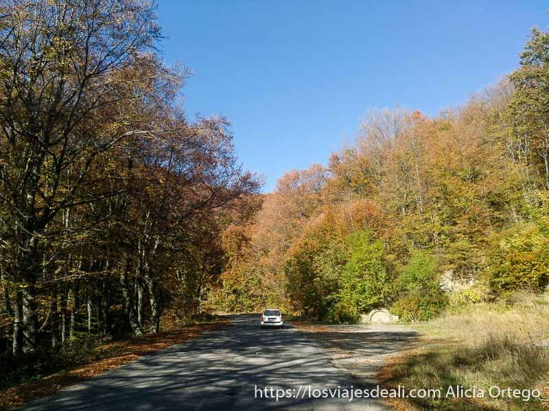 carretera rodeada de árboles con colores del otoño y una fuente a la derecha
