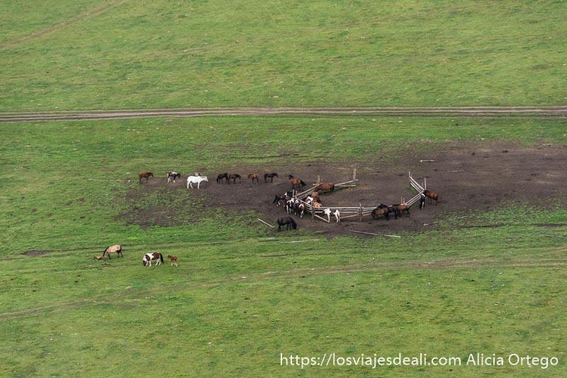 caballos en medio de un prado con un camino de tierra al lado vistos desde arriba