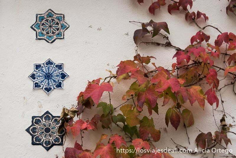 pared con hojas de parra de color rojizo y tres azulejos con dibujos azules